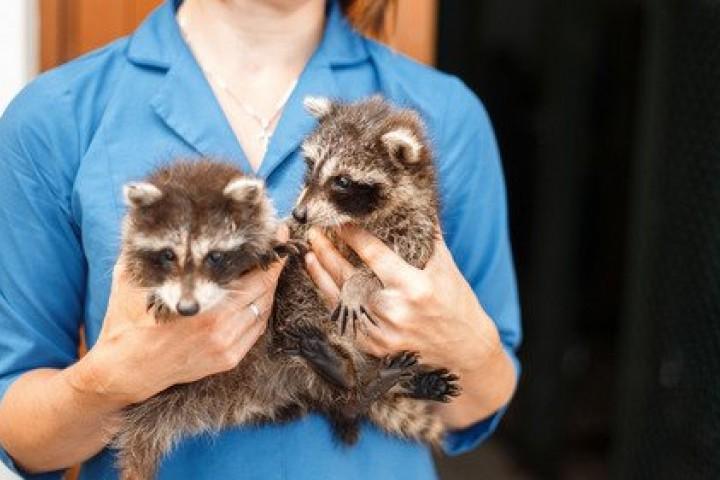 Консультация врача по экзотическим животным